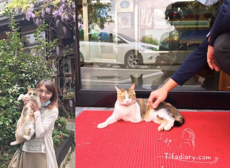 清境特色民宿有貓咪